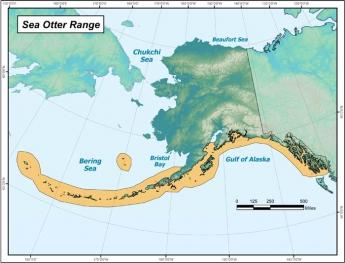 Alaska Species Alaska Sealife Center