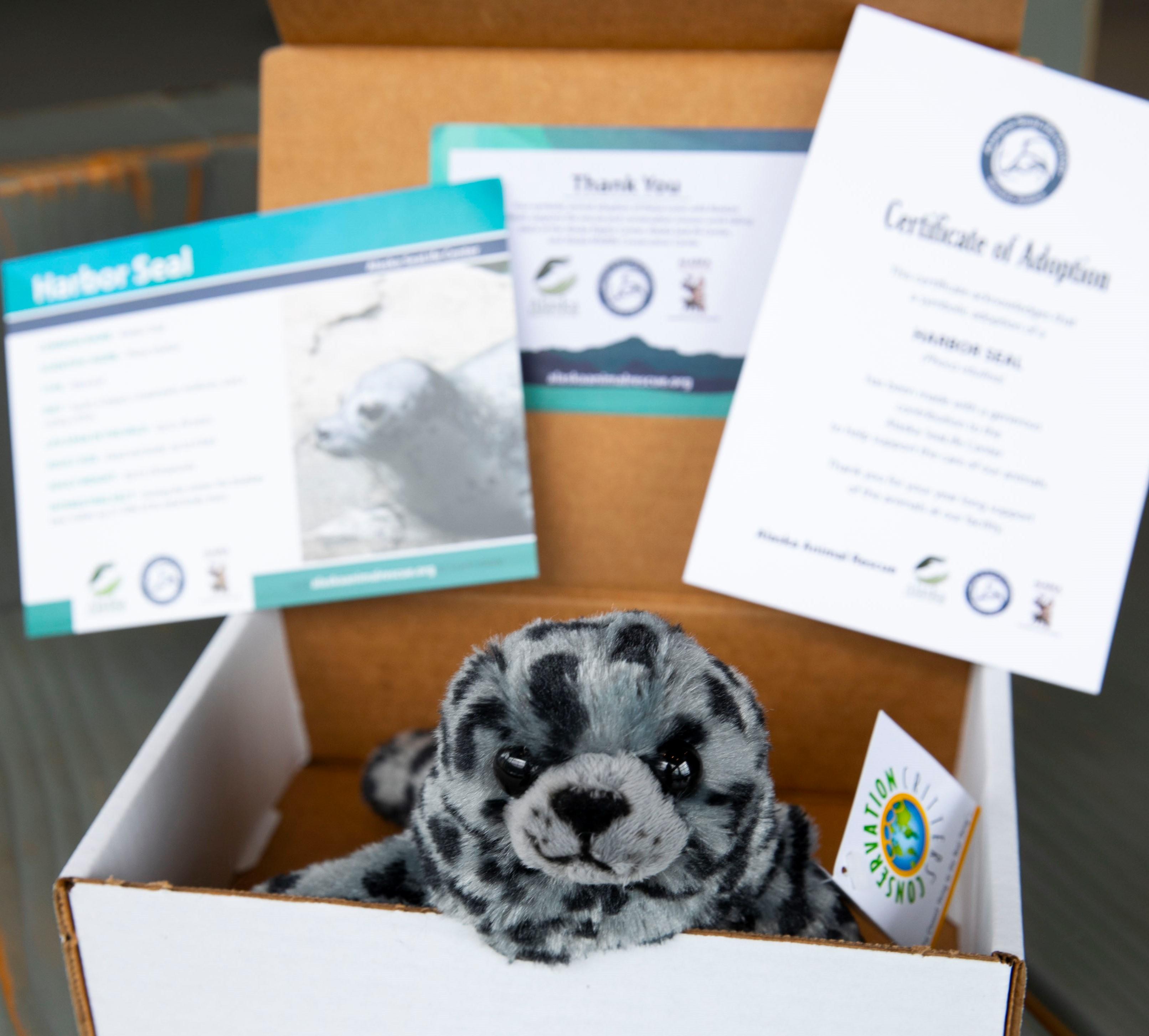 Harbor Seal Kit
