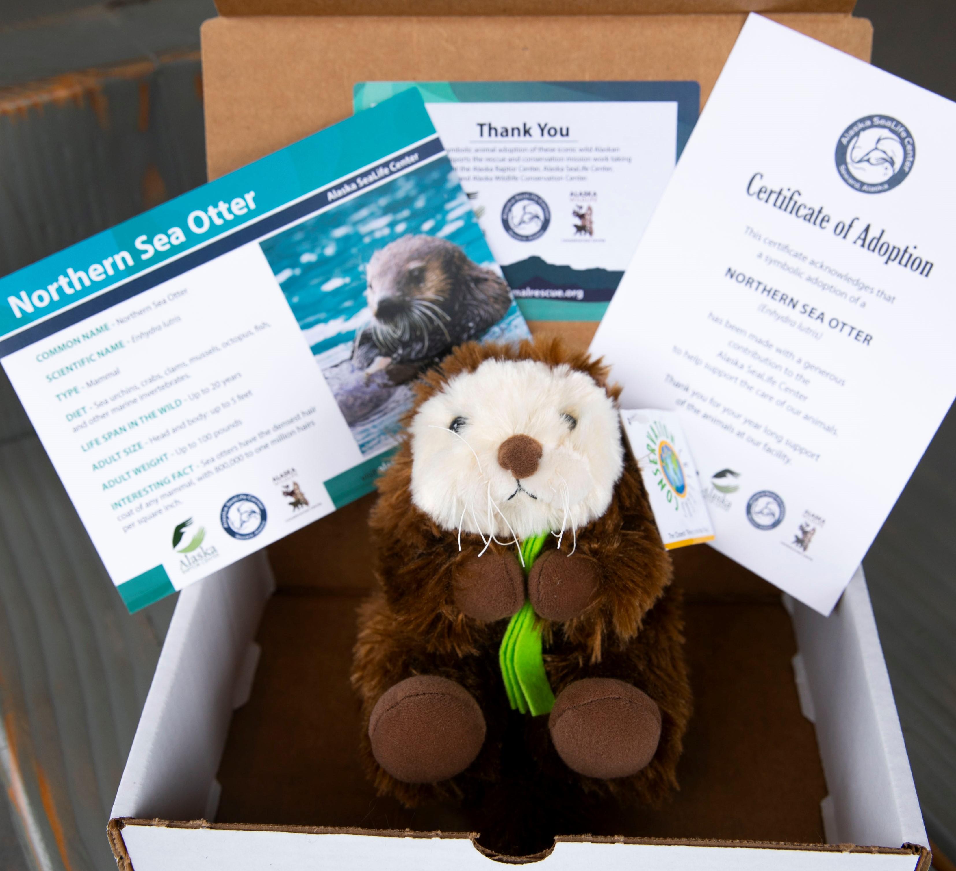 Northern Sea Otter Kit