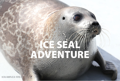 Ice Seal Adventure