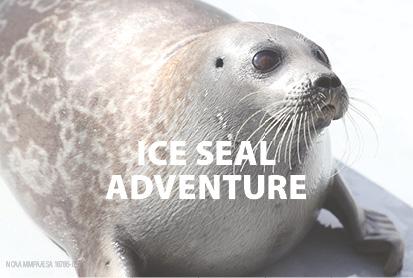 Ice Seal Adventure