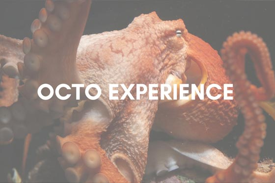 Octopus Experience