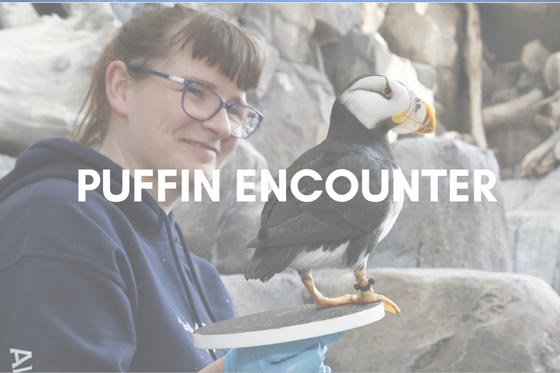 Avian Curator holding a horned puffin - Puffin Encounter