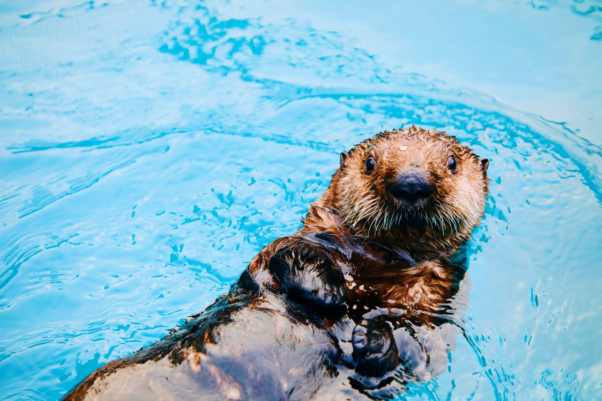 c4ffbdcb ... Sea Otter Experience [keywords] => [description] => [thumbnail] => 0  [template] => sub_page [accordion_id] => 0 [header_images] => [content] =>