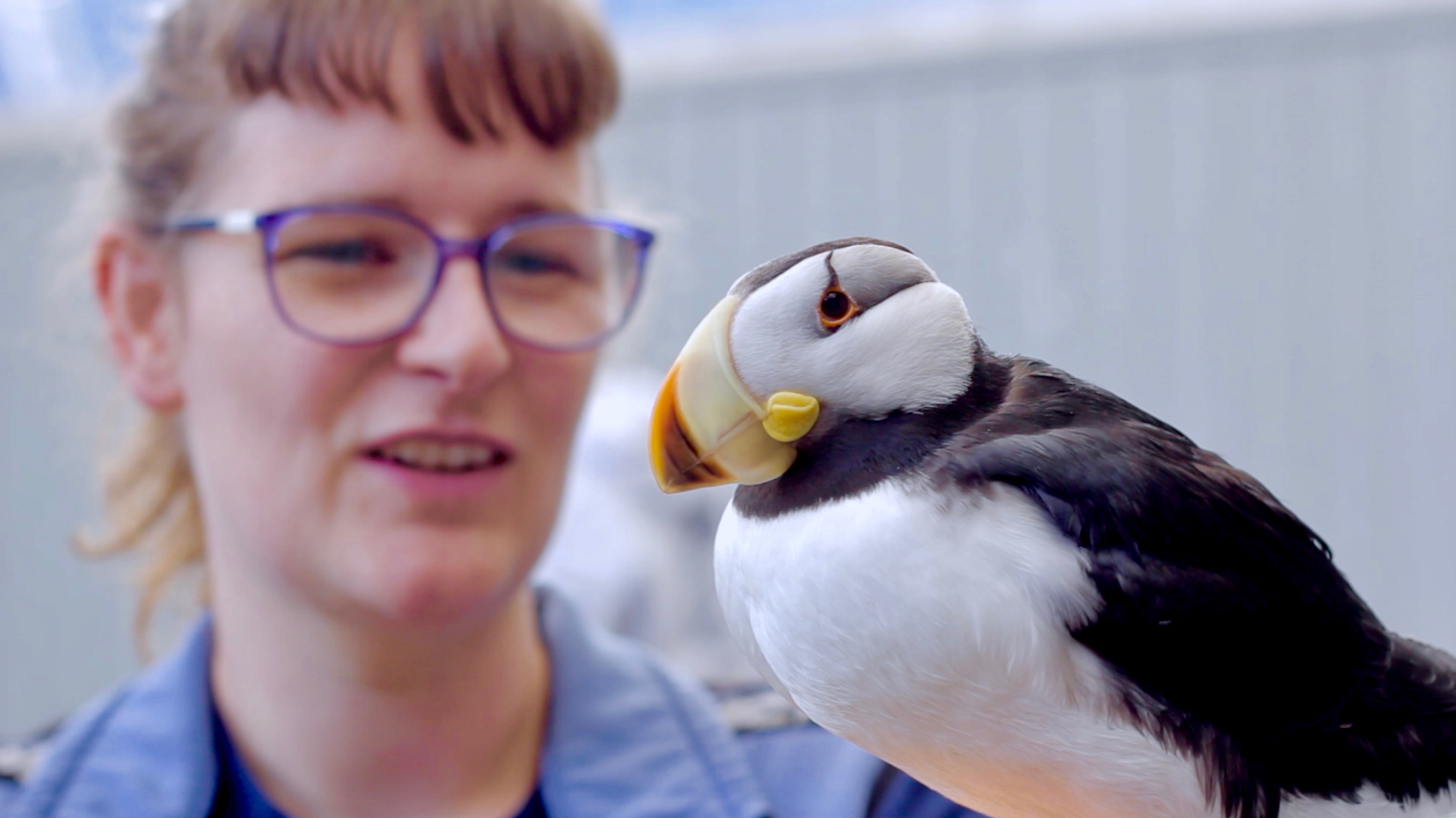 Kristen Pelo, Avian Curator with a Horned Puffin
